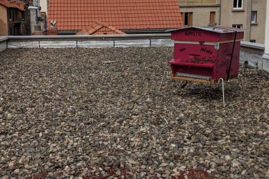 Ruche peuplée d'abeilles sur le toit de l'institut de langue Bonjour World